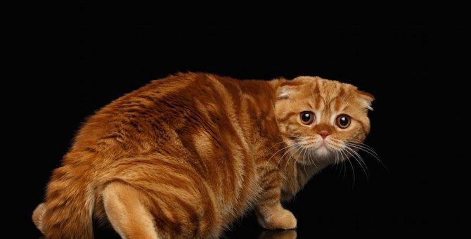 猫が逃げる6つの理由と正しい接し方