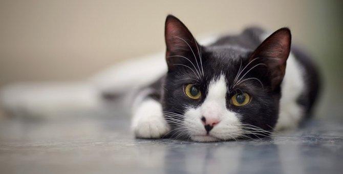 猫の命を削る最悪な飼い方4つ