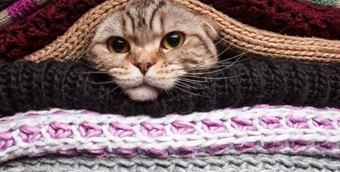 猫の防寒対策にオススメのグッズ5選
