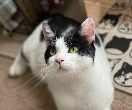 猫が心待ちにしている『5つの時間』 飼い主と過ごす時間をより充実したものに♡