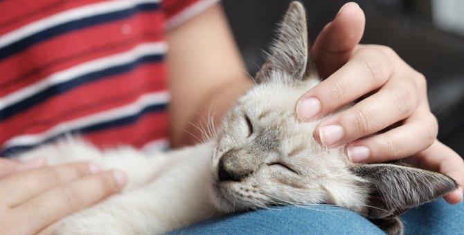 猫が『スキンシップ』を求めているときの行動5つ!愛が伝わる撫で方のコツとは?