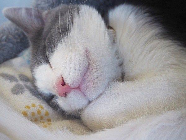 寝る位置で分かる猫の気持ち5つ