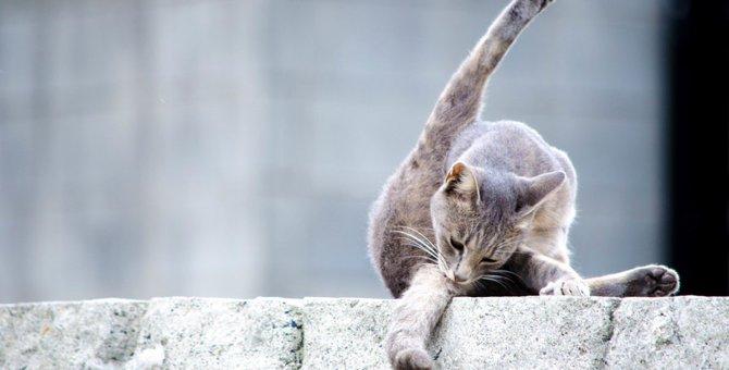 セクシーポーズの猫が誘ってくる画像5選!