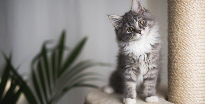 猫に絶対NGな『お留守番のさせ方』5つ