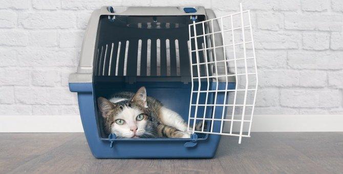 猫のケージカバーの使い方、選び方、おすすめ商品4つ