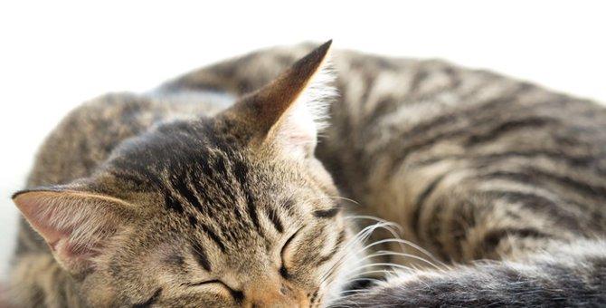 猫の嘔吐の危険性 正しい判断をするための観察力を持とう