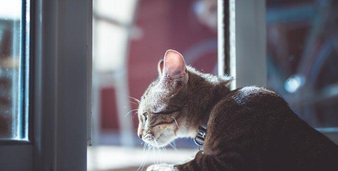 猫に『近寄ってはいけない』4つのシーン