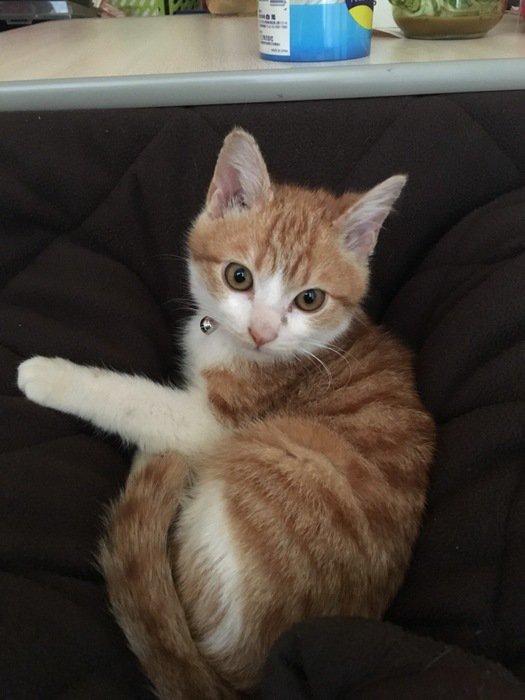 病気かもしれない猫の『目やに』の特徴とは…
