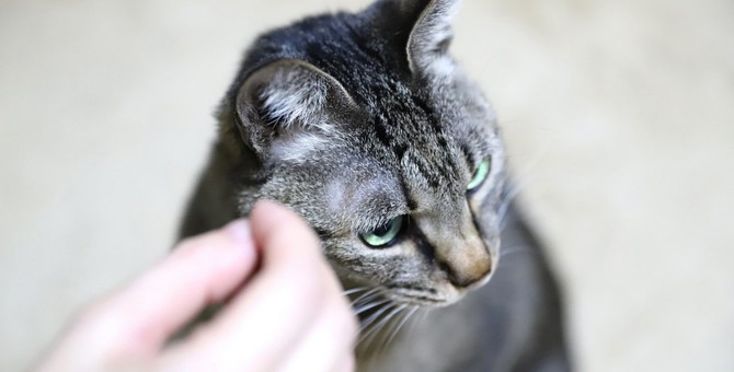 猫のことが好きなのに『猫に嫌われる人』の特徴5つ
