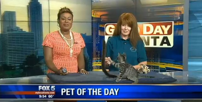 テレビ番組出演中、バク転で画面から消えた猫
