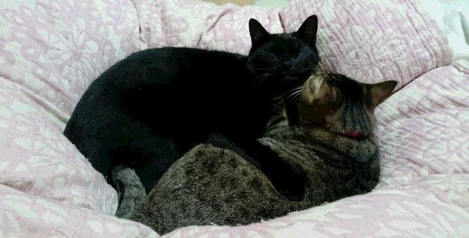 動物病院の里親募集で出会った2匹の猫『クロタ』と『ひまわり』