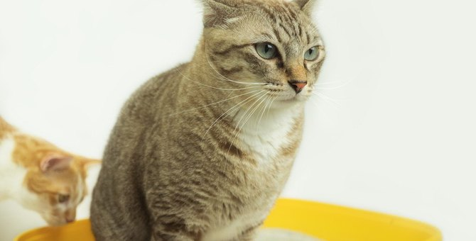 猫の『トイレトレーニング』に失敗してしまう人の共通点5つ