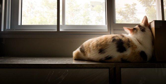 猫がお留守番でひとりになると鳴く理由3つ