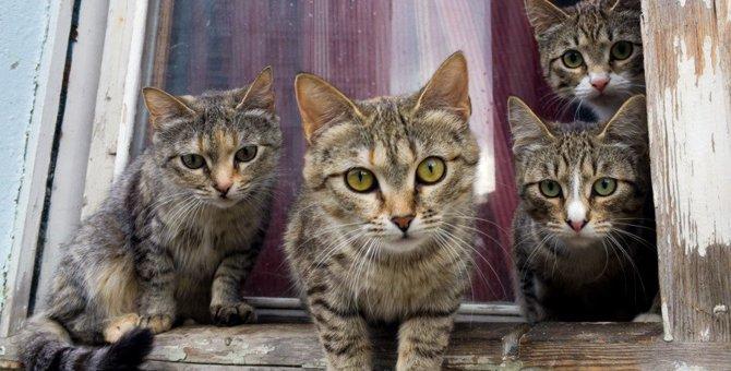 猫社会で『上下関係』はどう決まるの?犬との違いや人間との主従関係を解説!