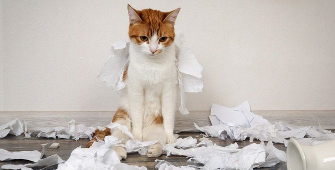 『反省している猫』がみせるサイン4選!飼い主がすべきアフターケアとは?