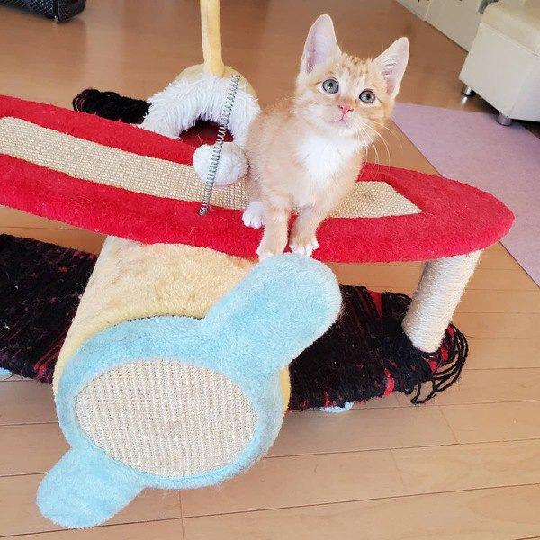 猫がオモチャに飽きてしまったときの対処法5つ