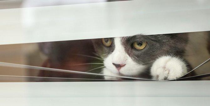 猫の悲しい事故を防ごう!家の中の『危険な場所』4選と対策