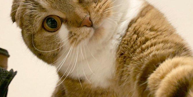 猫は落ち込んでいる人が分かる?猫が泣いている人を慰めてくれる7つの理由
