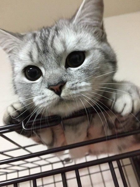 親バカだと言われても…!愛猫のカワイイ仕草9選