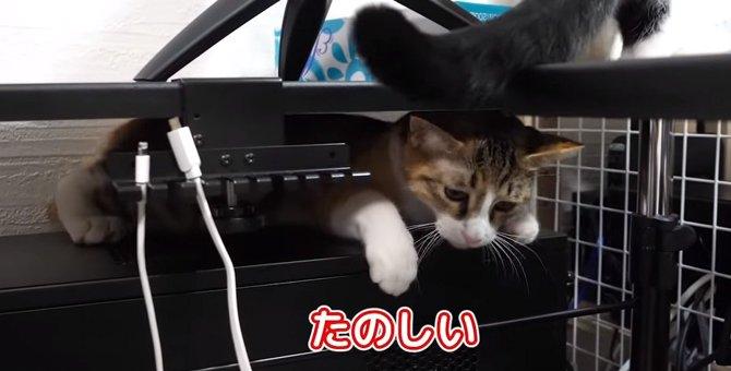 同居猫ちゃんもビックリ!お気に入りの挟まりスポットを見つけた猫ちゃん