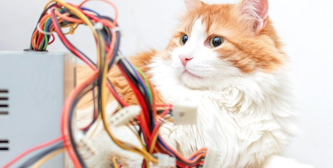 猫が噛みやすい『電気コード・ケーブル』3選!トラブル事例や防止策を解説!