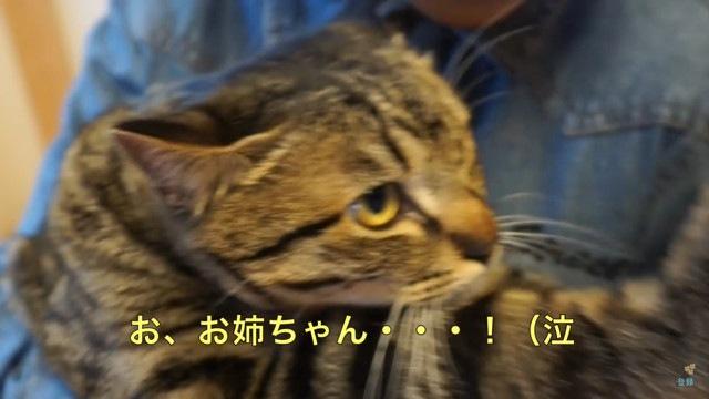 「お姉ちゃんがいいニャ!」弟くんとお姉ちゃんでリアクションが違う猫ちゃん