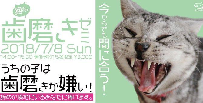 猫の為の「歯磨き講座」が池袋で開催!日程や内容をご紹介します