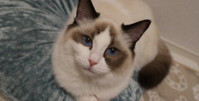 猫の飼い主が『猫から教わった』と感じることランキングTOP3