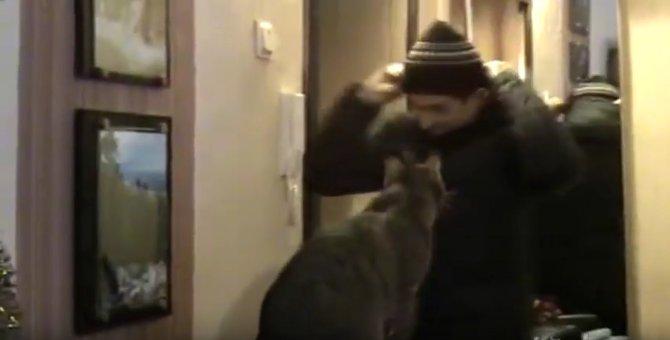 「ついて行くニャ!」出掛けるお父さんの肩に乗る甘えん坊猫さん