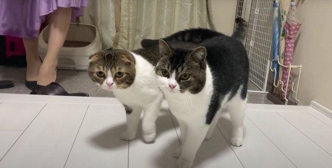 お見送りにお出迎え!ママさん大好きな猫さんたち♡