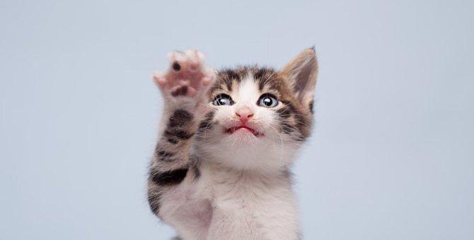 猫がひっかく時の4つの理由と対策の方法