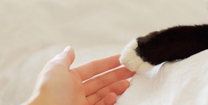 猫の足に隠された4つの秘密!猫の足には手相や利き手があるらしい!
