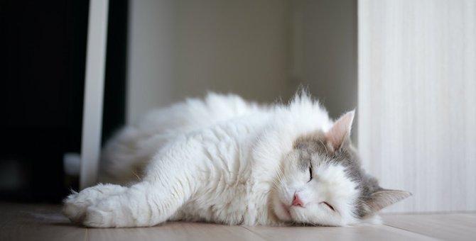 猫の危険な『眠り方』3選!こんな姿勢や症状が出ていたら注意が必要かも…?