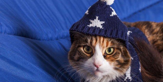 夢占いと猫について 意味と解釈