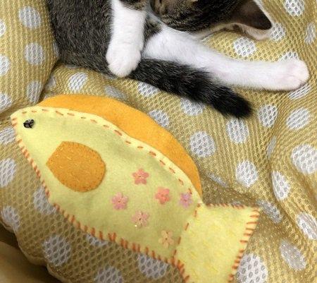音が鳴ってカミカミが止まらない♡猫の蹴りぐるみを手作りしてみよう!