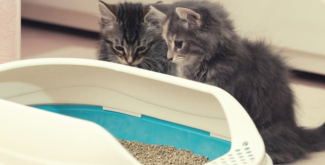 猫の『トイレトレーニング』とは?試すべき5つの方法と注意点を解説