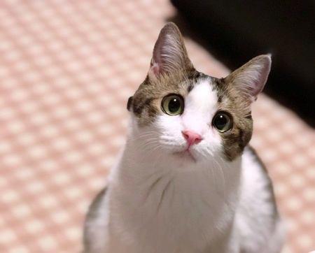 猫が『好きな人』と『嫌いな人』に見せる態度の違い5つ