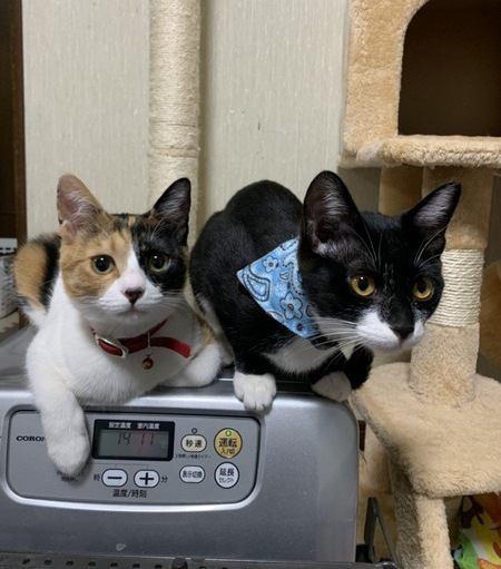室内飼育の猫同士がケンカする理由5つ