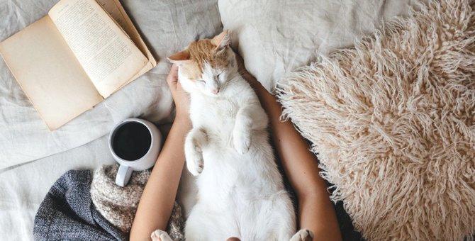 猫を落ち着かせるサプリ「ジルケーン」とは?効果や与え方、注意点まで