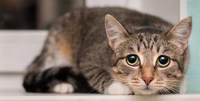 『精神的に不安になりやすい猫』の特徴とは?主な症状5つと対処法