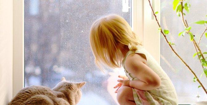 マンションで猫を飼う時の注意点や対処法