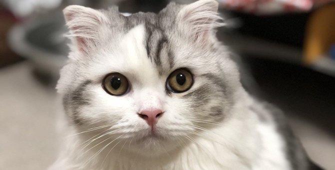 Laylaの12猫占い 10/14~10/20までのあなたと猫ちゃんの運勢