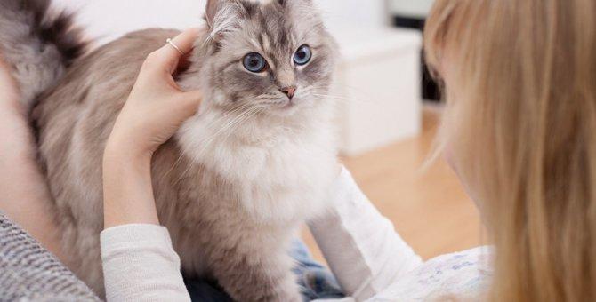 猫の世話に疲れたら…無理しなくてOKな飼い方ポイント4つ