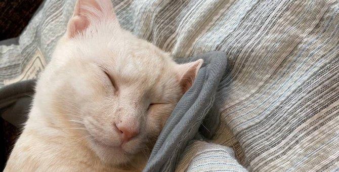車ではねた猫をドライバーが動物病院に置き去りにした結果…
