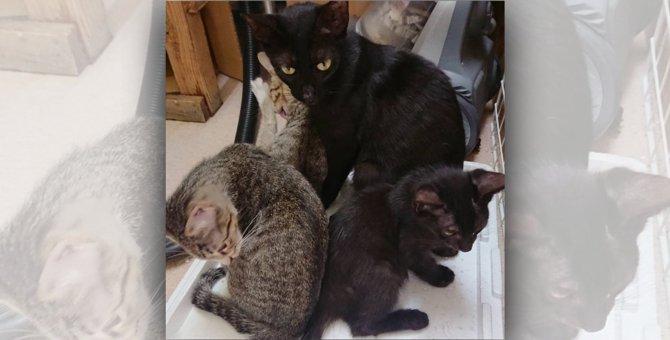 【凶悪】地域猫毒殺事件発生中。動かぬ母猫から離れない3匹の子猫に涙