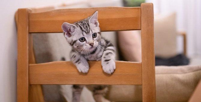 猫が『体調が悪いとき』にする行動5選