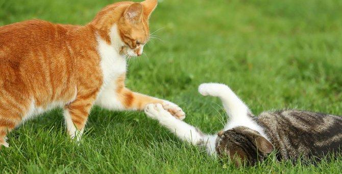 猫のじゃれあいと喧嘩の違いを見極める6つのポイント