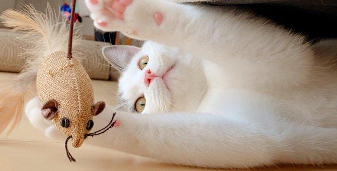 Laylaの12猫占い【2/3~2/9】のあなたと猫ちゃんの運勢