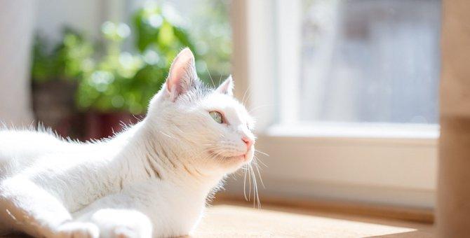 猫が日向ぼっこを好む3つの理由