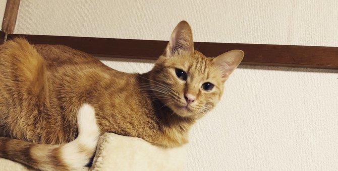 保護猫との出会い、そして暮らし。